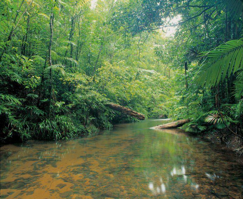 Picturesque rainfortest creek, Djiru National Park