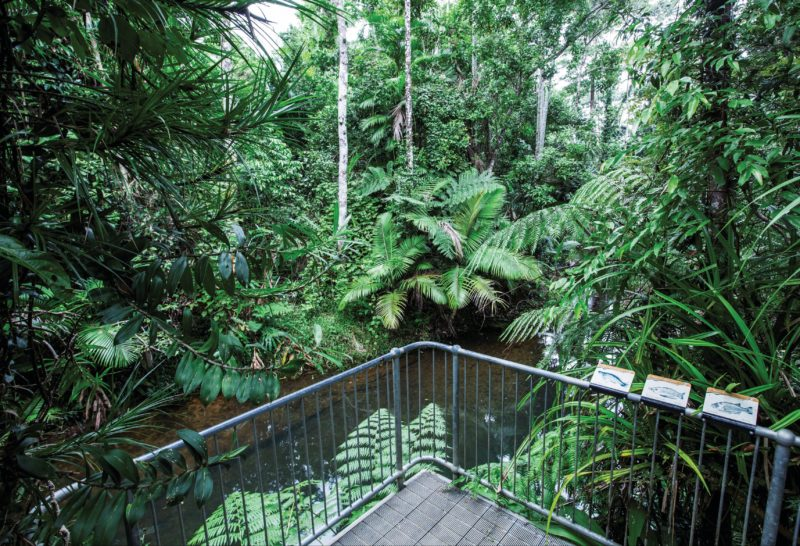 Viewing platform over Lacey Creek in rainforest.