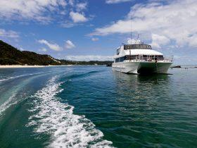 Dolphin Wild - Island Cruises