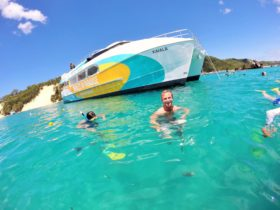 Snorkel the Tangalooma Wrecks and see up to 250 species of fish, rays, octupi.