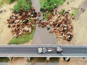 Eidsvold Station Bridge - Eidsvold Cattle Drive