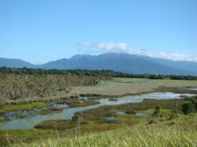 Swamp with mountainous backdrop at Enbenangee Swamp.