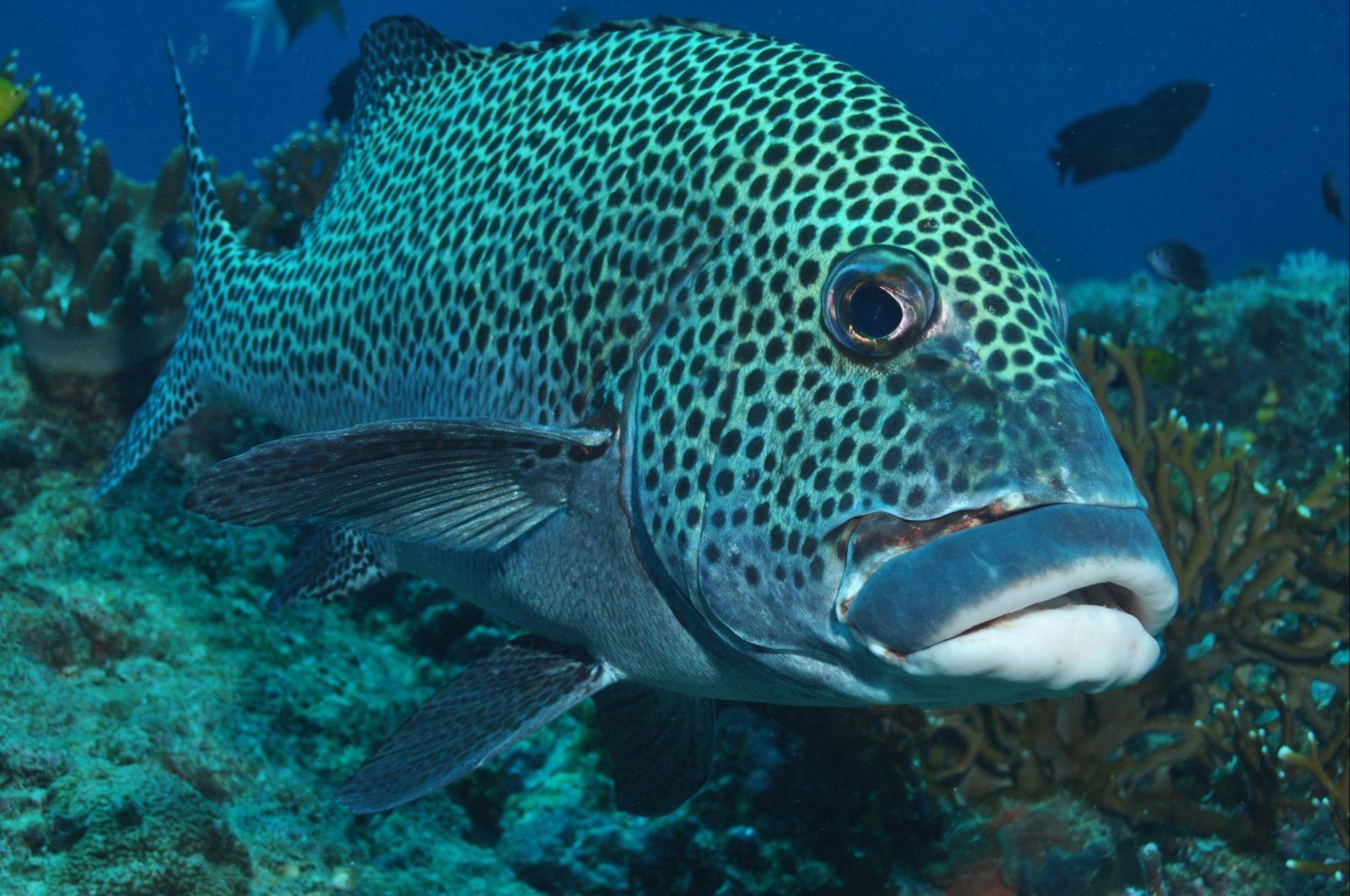 Fish Bowl Dive Site