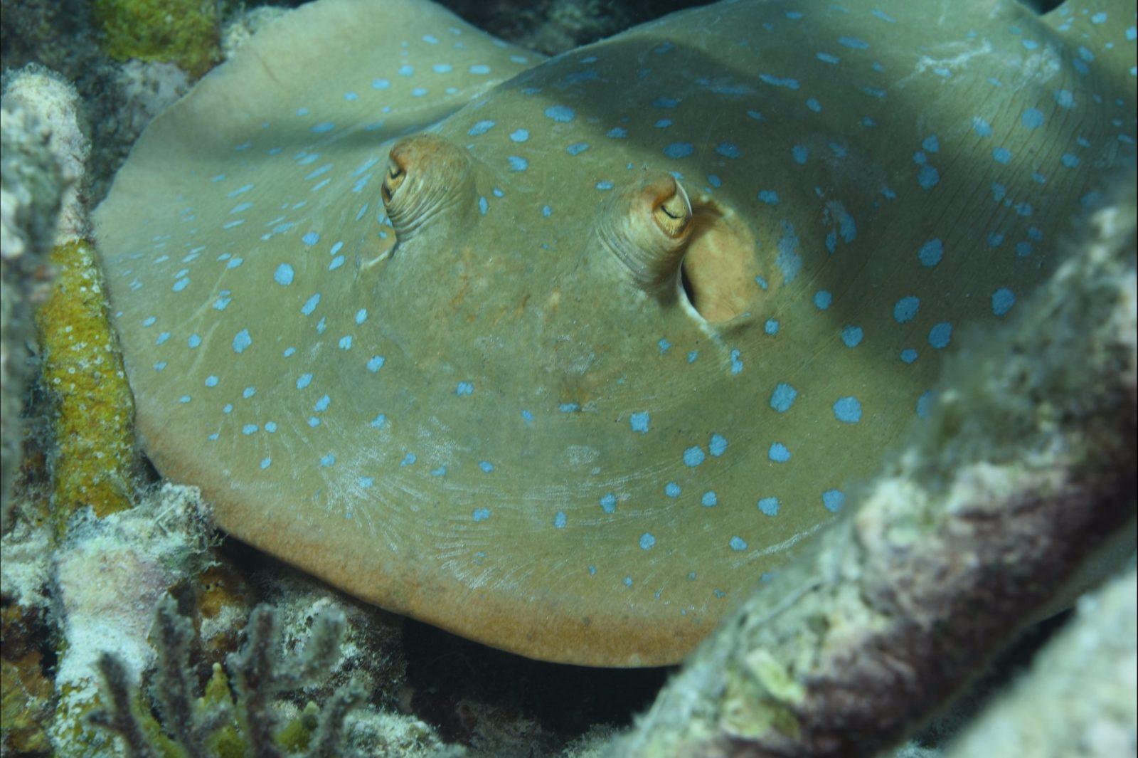 Fitzroy Island Dive Site