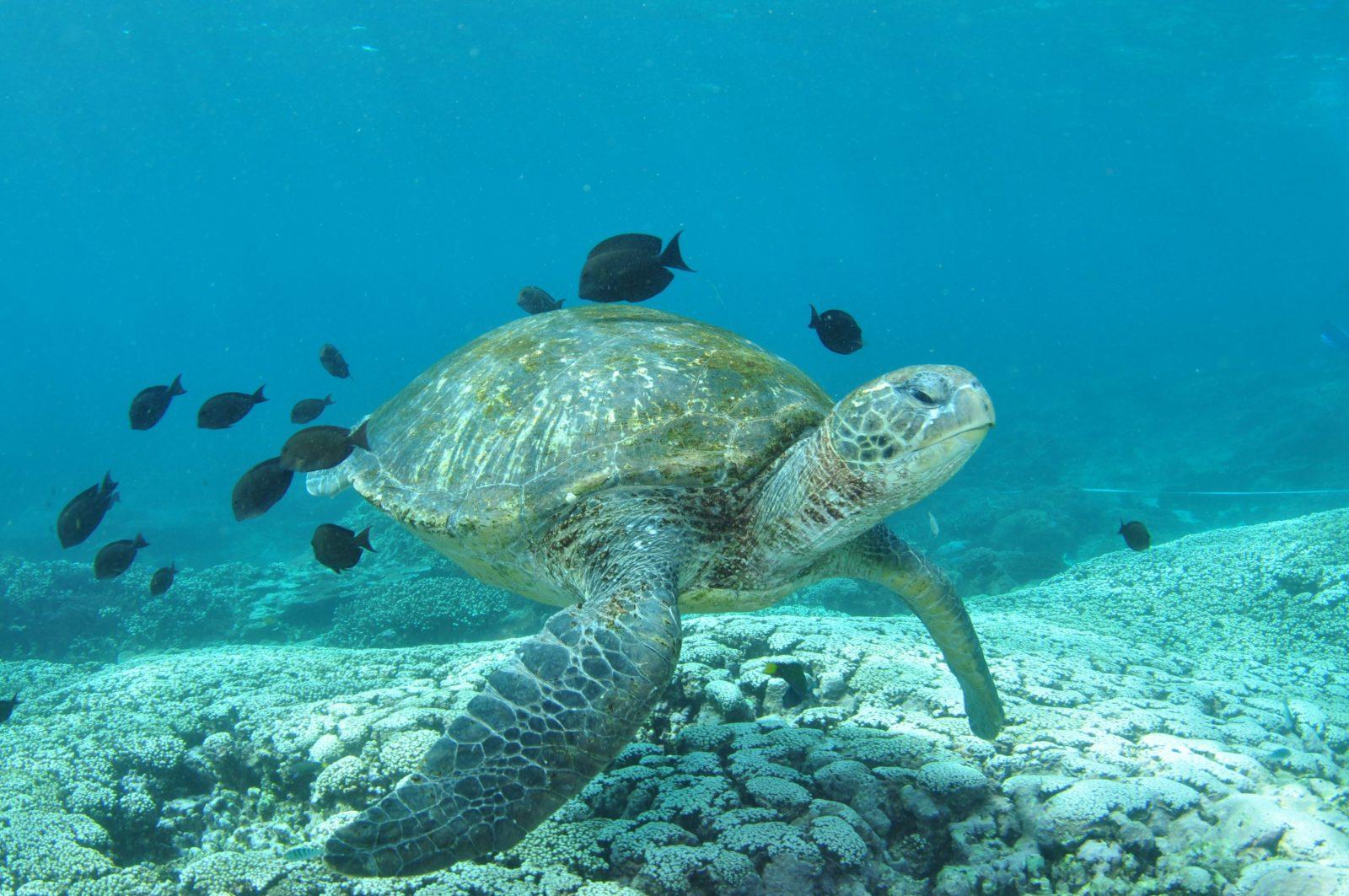 Flinders Reef