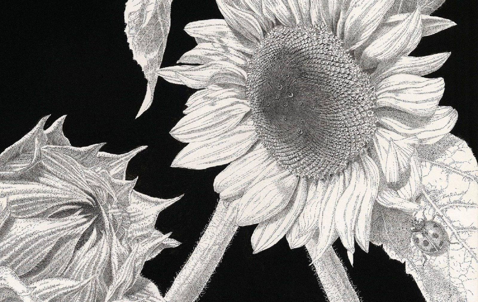 Stippled ink on Clayboard