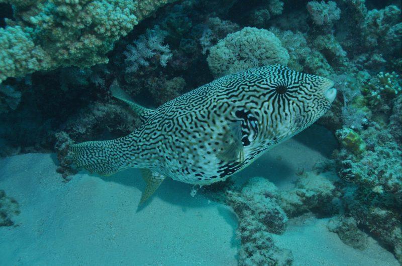 Frankland Islands Dive Site