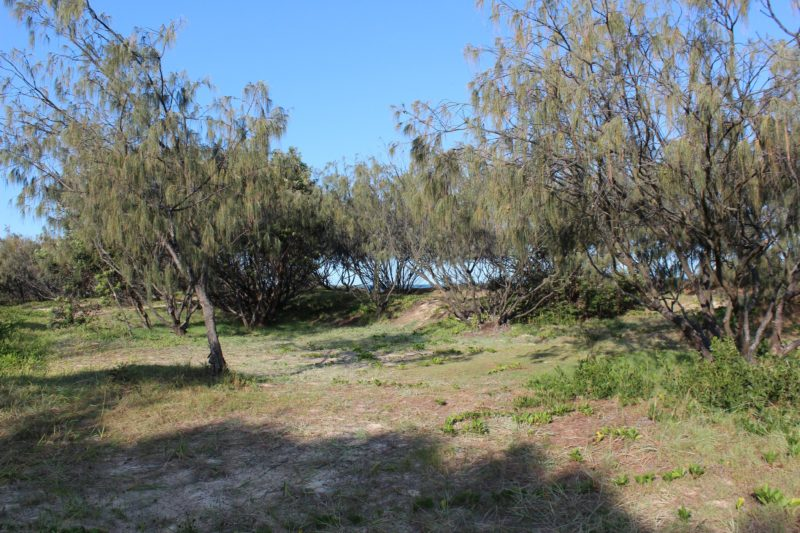 Camping area behind the beach, Fraser Island
