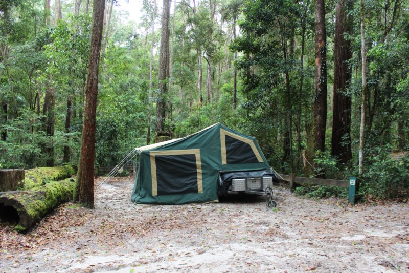 Camp site surrounded by tall forest on Fraser Island