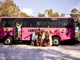 Cool Dingo Tours