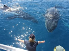 Two whales close to the boat interacting with the passengers and crew