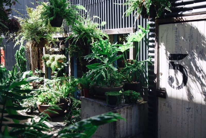 Gather and Dust Temple alleyway filled with beautiful plants