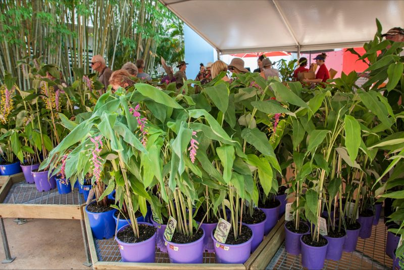 Hundreds of beautiful plants for sale