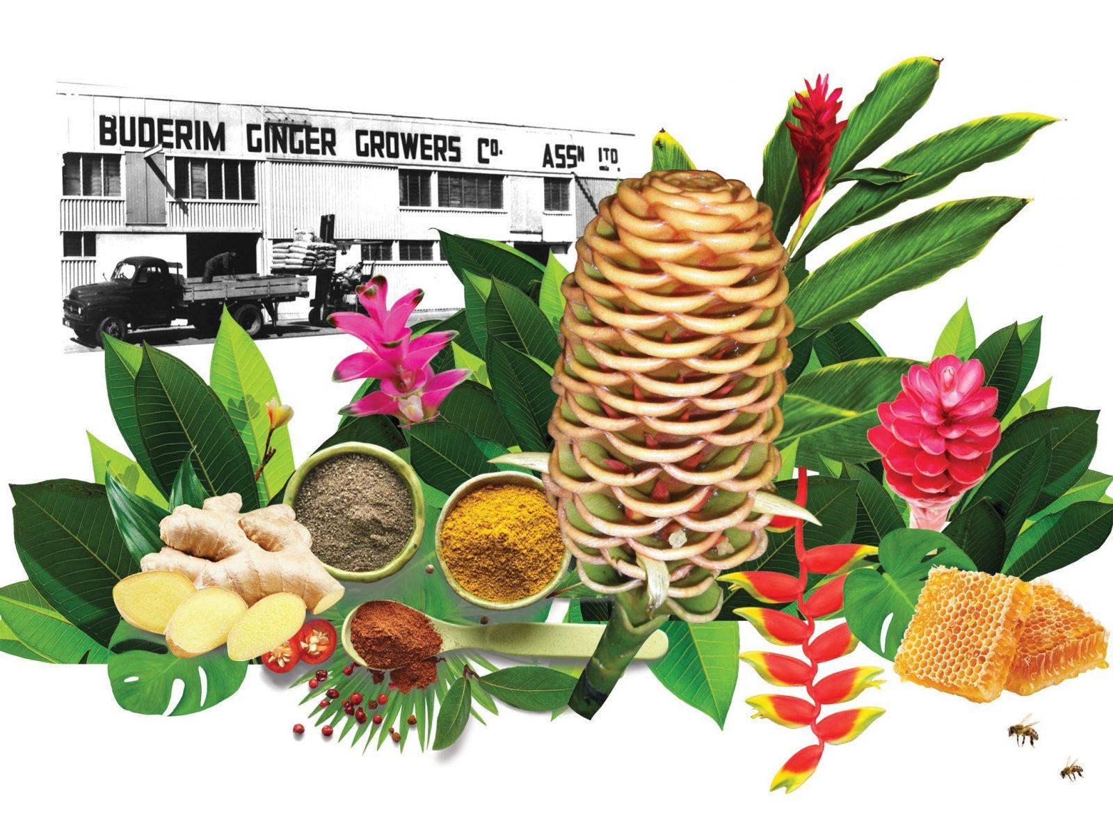 Ginger Flower Food Festival