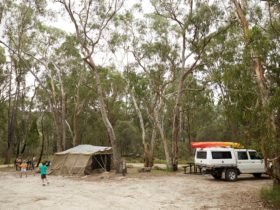 Camping area amongst open forest at Badl Rock creek, Girraween
