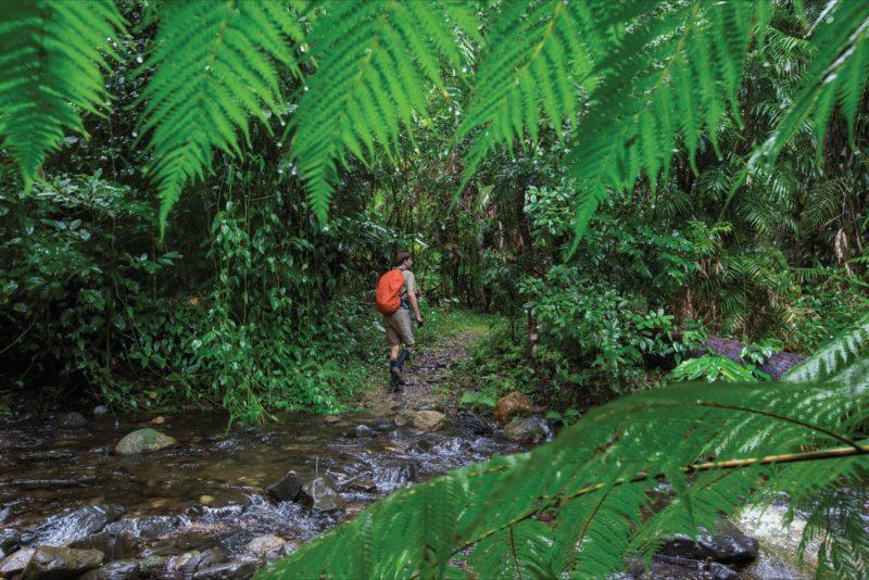 Walker on trail near creek crossing.
