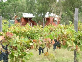 Fergies Hill Cottage sits overlooking the vineyard at Granite Ridge Wines.