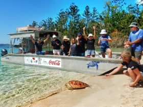 Marine debris removal and turtle release