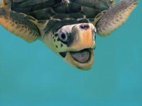 Meet turtles on the reef