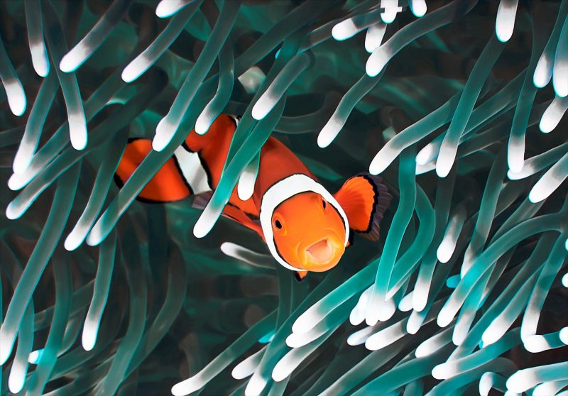 clown fish mascot