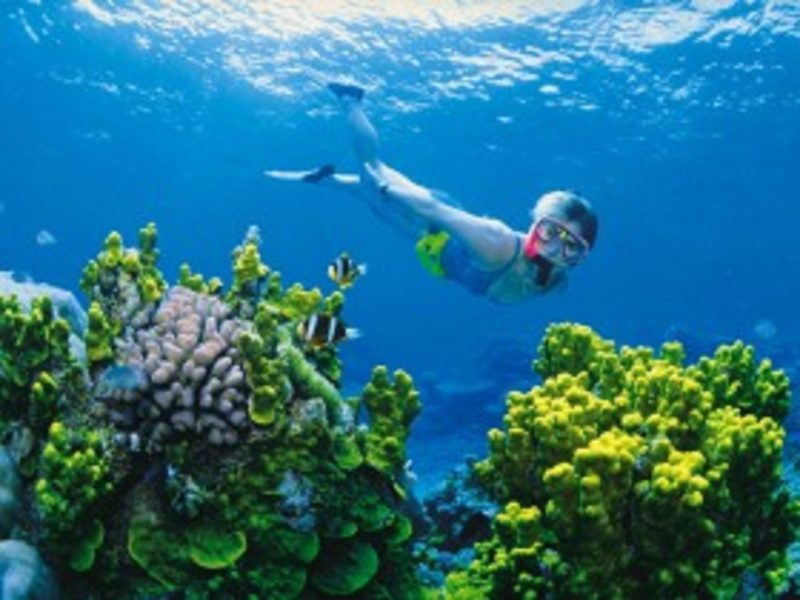 Snorkelling or diving on the Great Barrier Reef in the Whitsundays