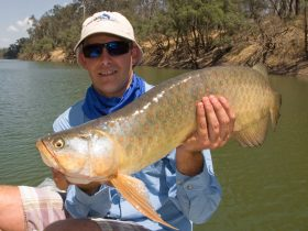 Saratoga, a great freshwater fishing option in the Fitzroy Tributaries.
