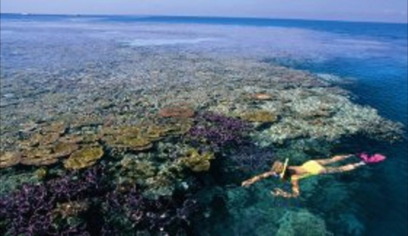Snorkelling on Hardy Reef, Queensland