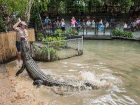 Hartley's Crocodile Attack Show