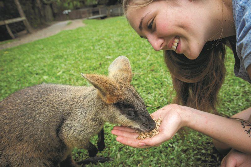 Wallaby Feeding Hartley's Crocodile Adventures