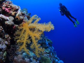 Holmes Reef Dive Site