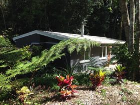 Honeybee House - Kuranda Pet-Friendly Holiday Accommodation