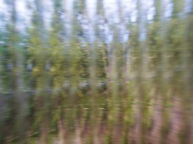 A blurred image of a field of grass.