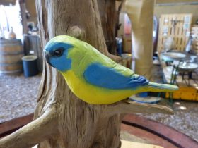 One of Maggie Brockie's Ballandean Turquoise Parrots