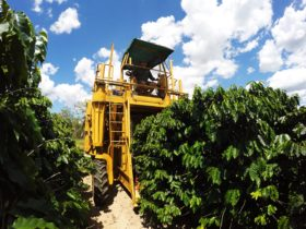 Jaques Coffee Harvester in Action