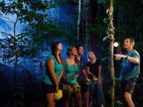 Jungle Adventures Night Walks