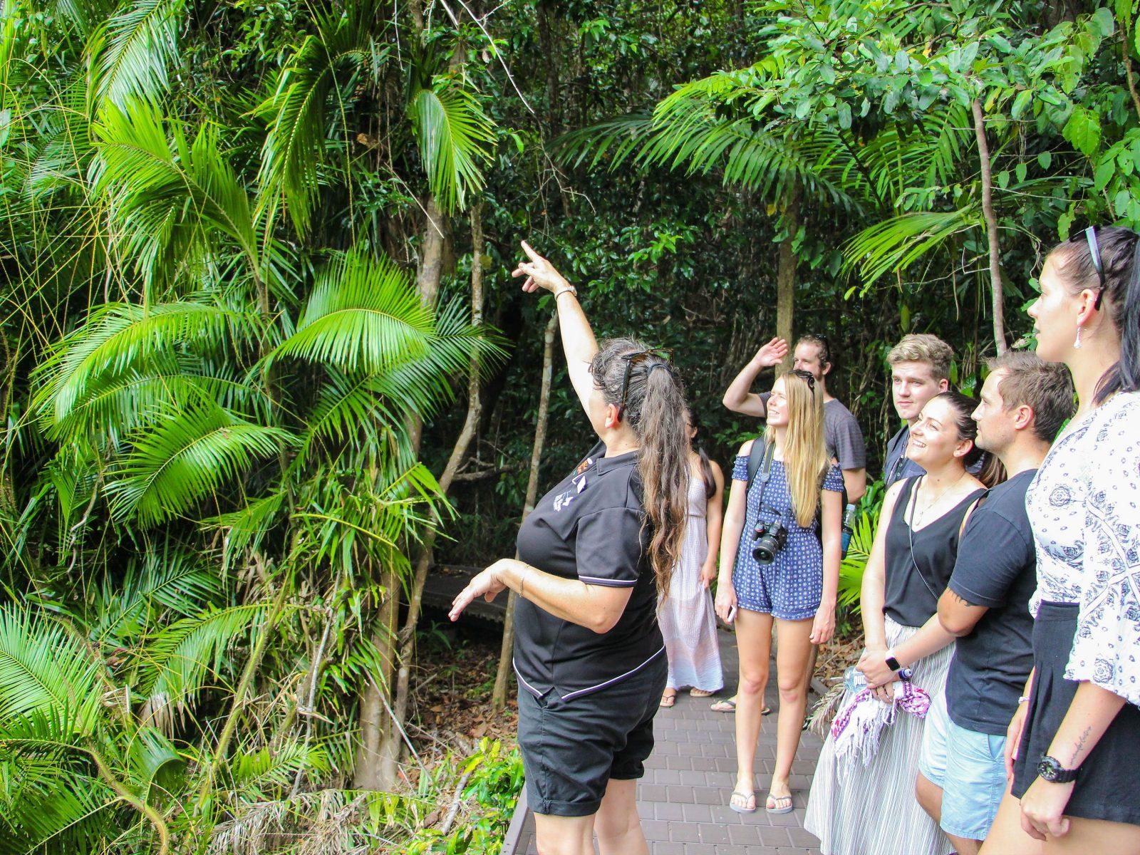 Daintree Rainforest Guided Boardwalk Tour Jungle Tours and Trekking