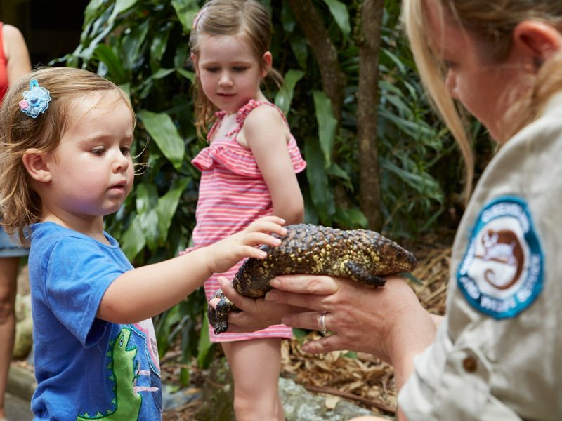 A shingleback lizard meeting some of the younger visitors to David Fleay Wildlife Park.