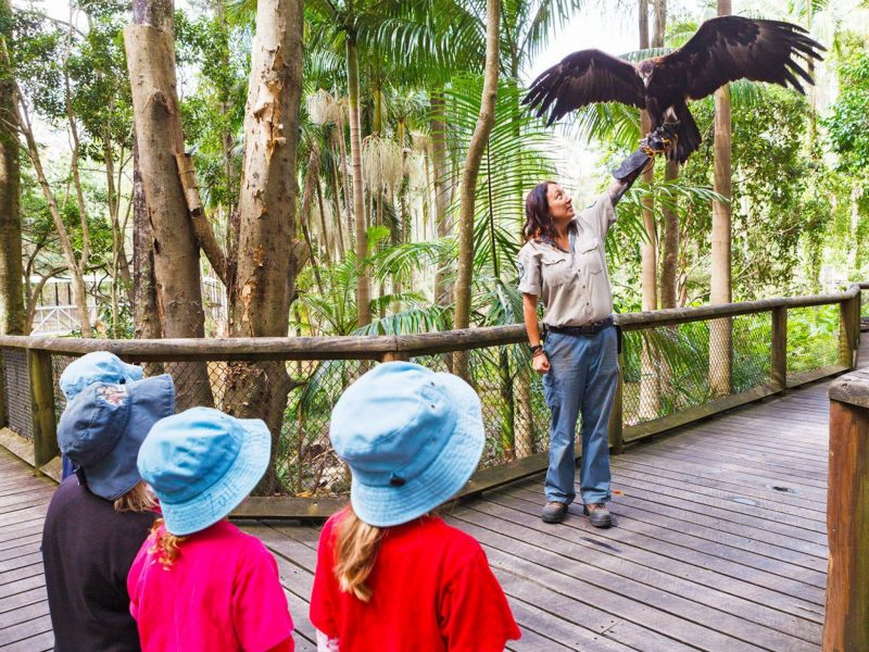 A ranger introducing some young students to a magnificent wedge-tailed eagle.