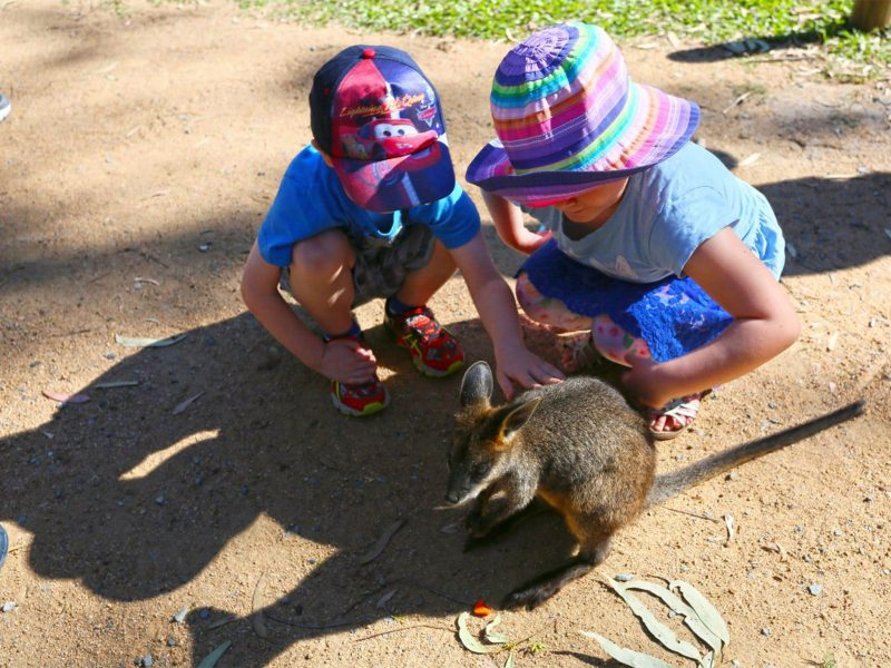 The kids will love meeting the wallabies at Wallaby Way!