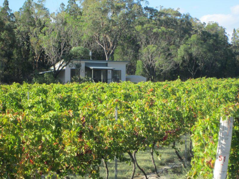 Syrah cabin from vineyard