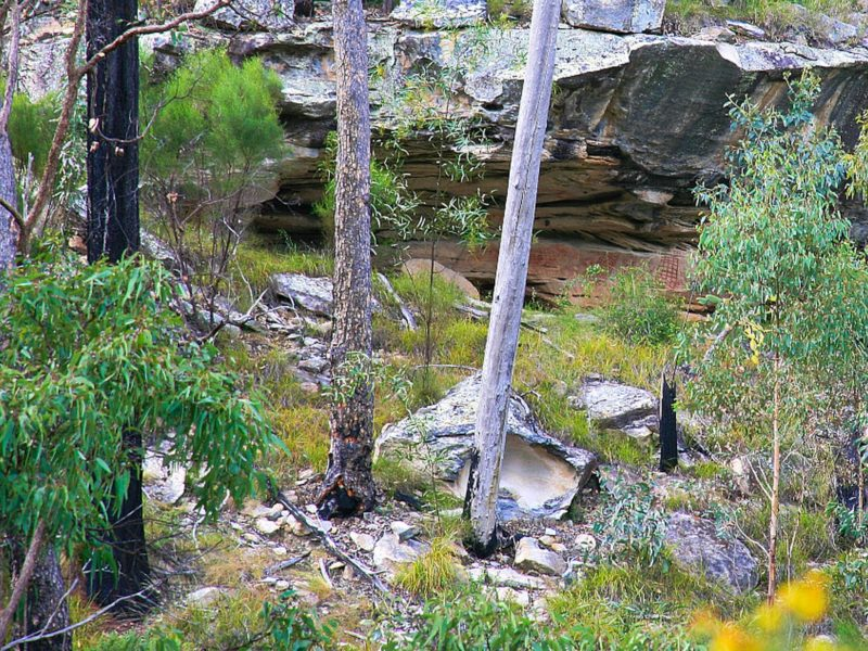 Bush scene with rocky cliff face and aboriginal art.
