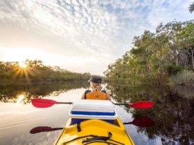 Upper Noosa River- Noosa Everglades