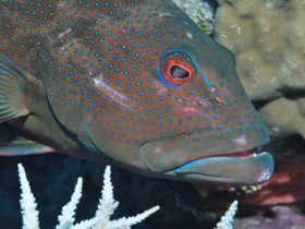 Keswick Island Dive Site