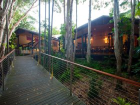 Rainforest Walkway Deck