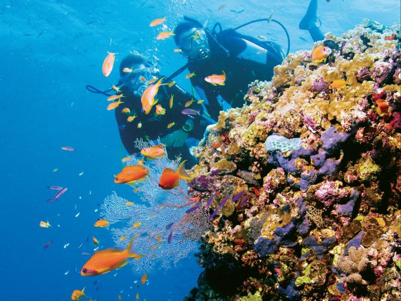 Dive & snorkel the islands and outer Great Barrier Reef - Whitsundays Sailing Adventures
