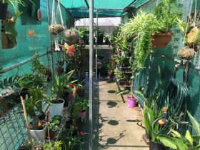 Kilcoy Craft Market- Nursery