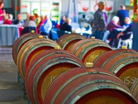 Barrels in the winery