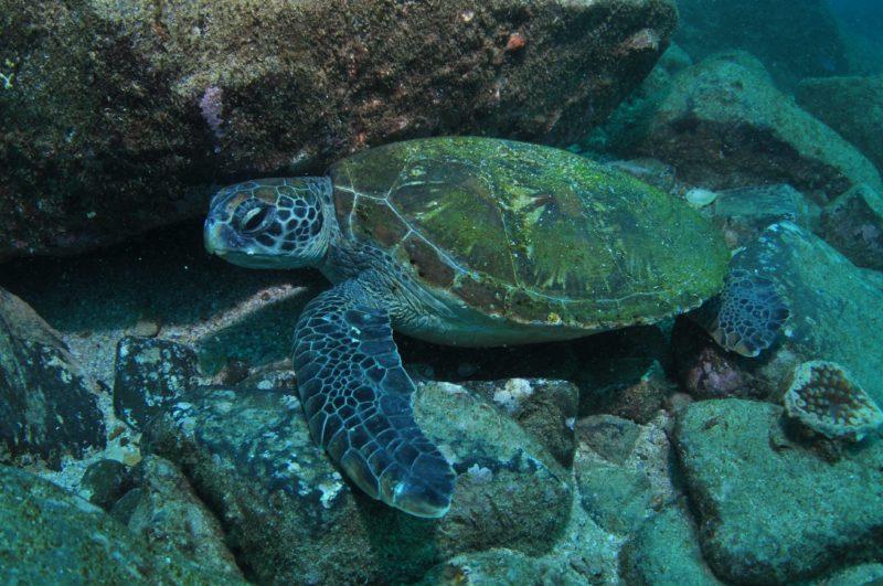 Kirra Reef