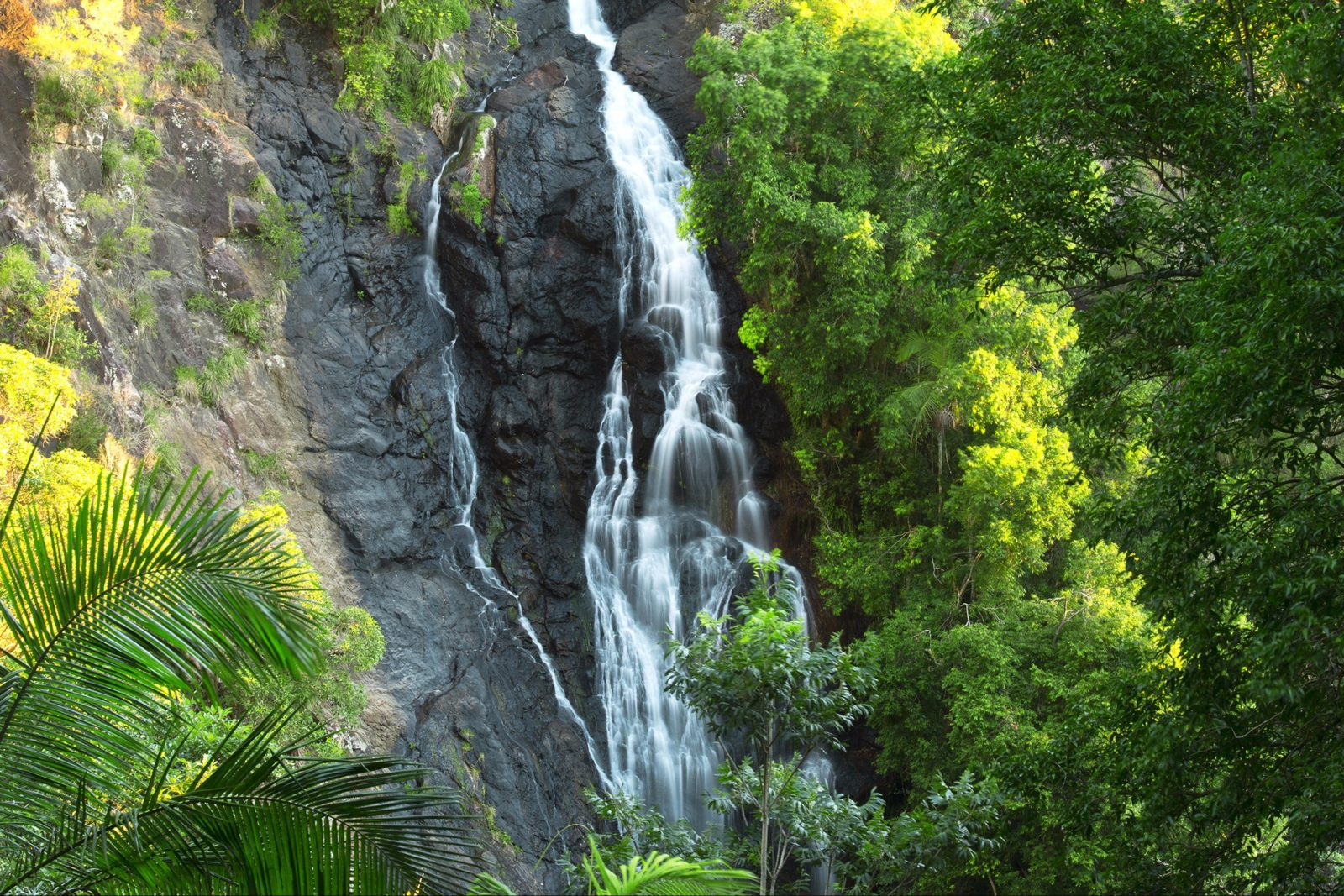 Waterfalls cascading down cliff face, Kondalilla National Park