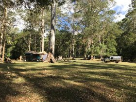 A camp set-up in a large grassy camping area with tall gum and eucalyptus trees throughout.
